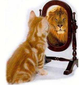 gattina-leone